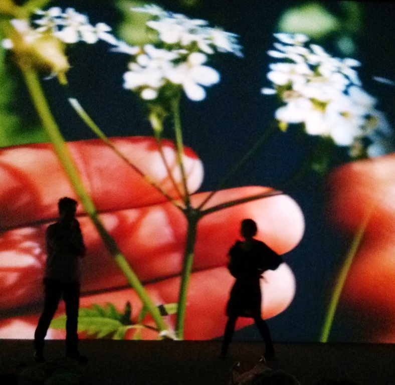 Pipilotti Rist 'Mercy Garden Retour Skin' 2014, installation view, Biennale of Sydney Museum of Contemporary Art Australia. Photograph: Chloé Wolifson